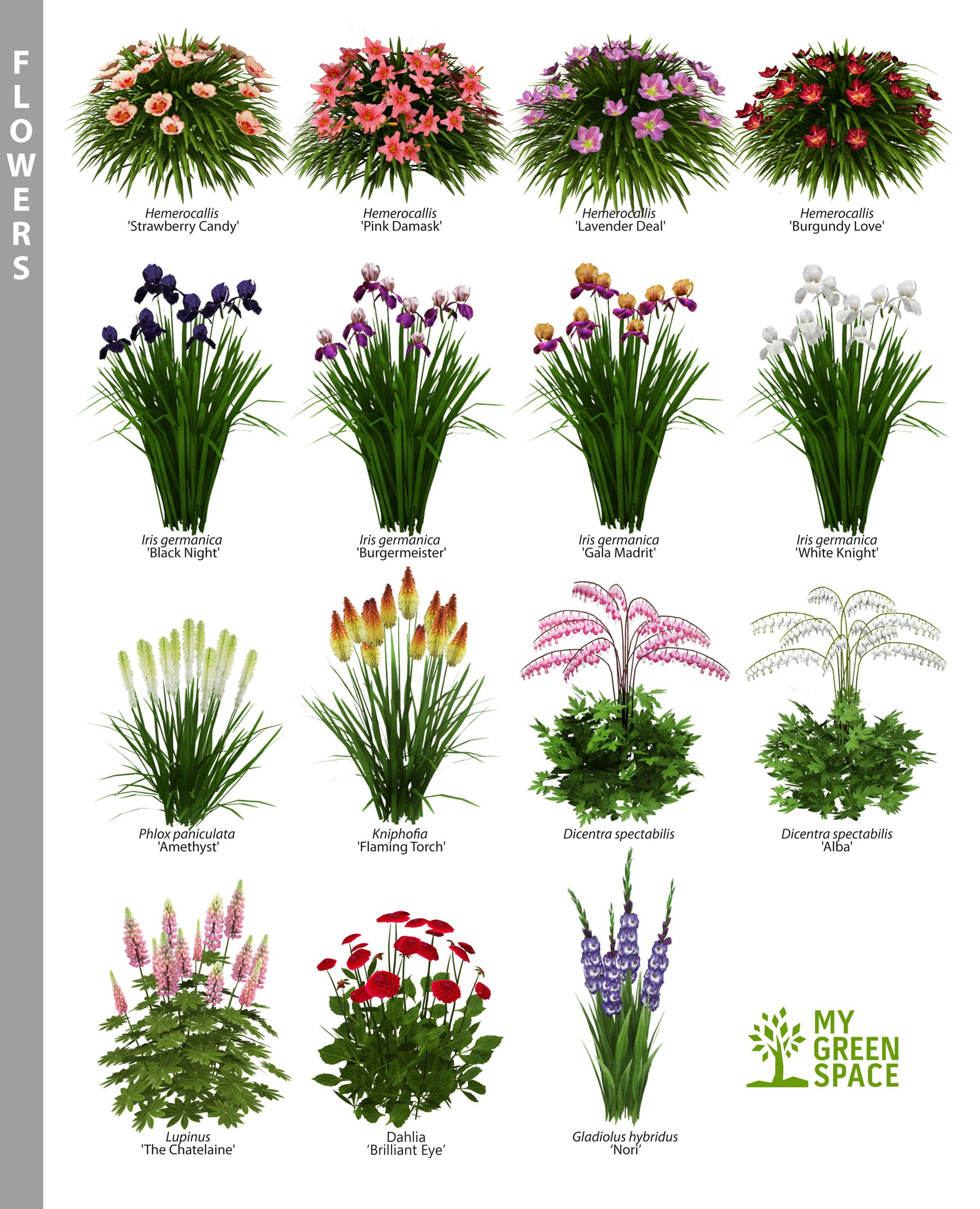 Which One Of These Beautiful Flowers Do You Like To Plant In Your