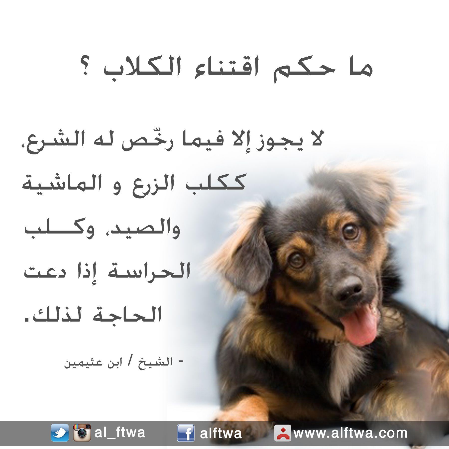 حكم اقتناء الكلاب Animals Dogs