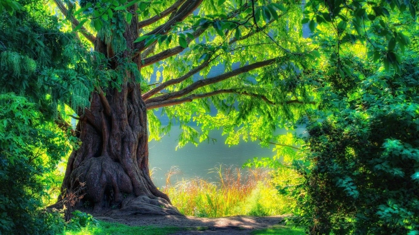 D Tree Nature Wallpaper HD  Wallpaper in 2019  Tree nature