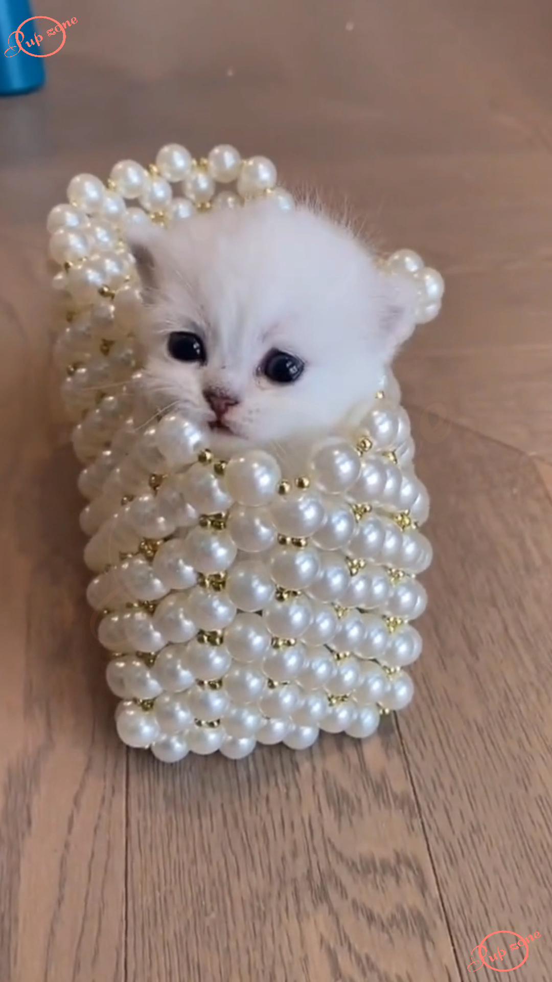 Cute Kitten Playing Hide & Seek