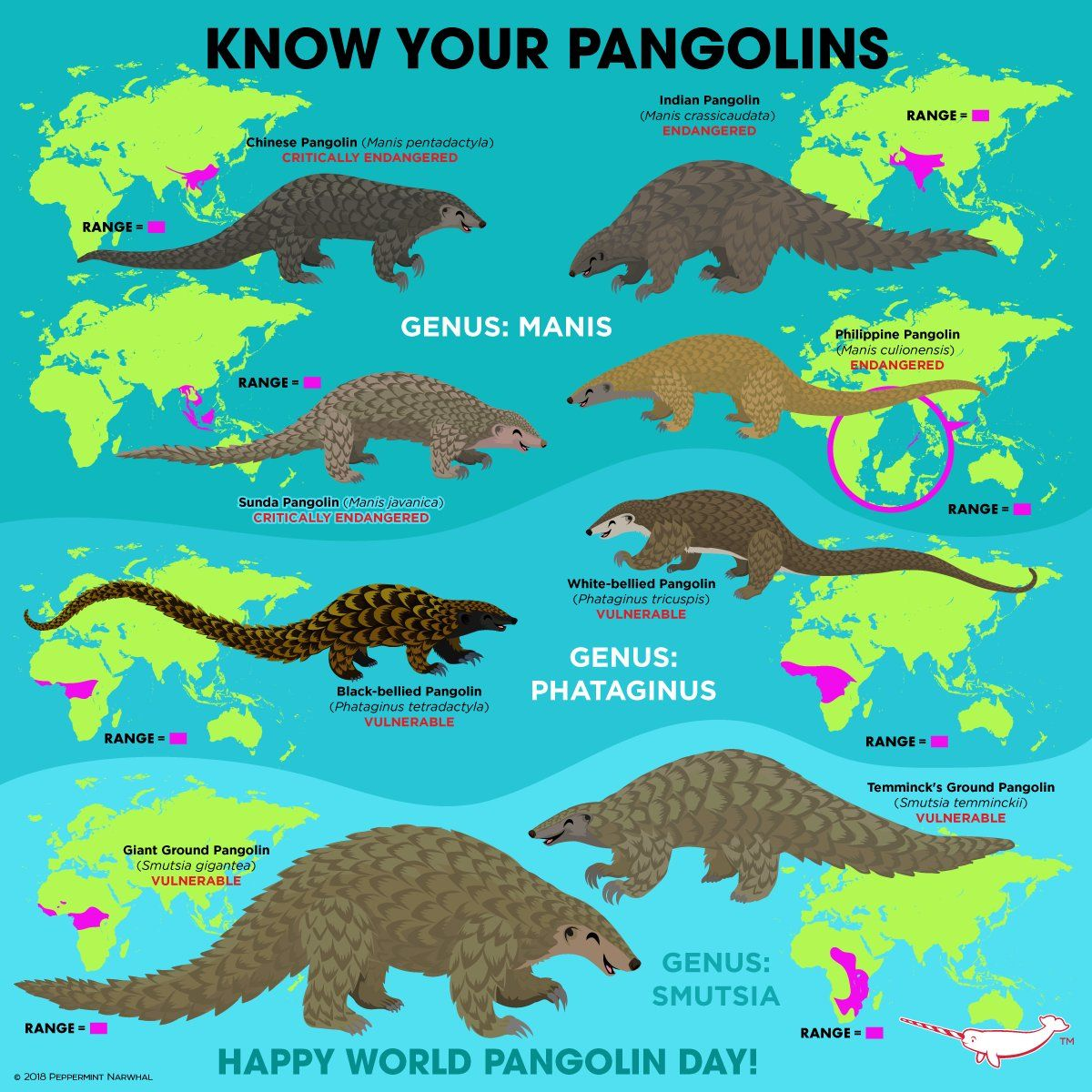 know your pangolins info