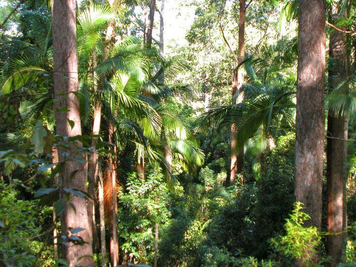 Rainforest, Conondale NP