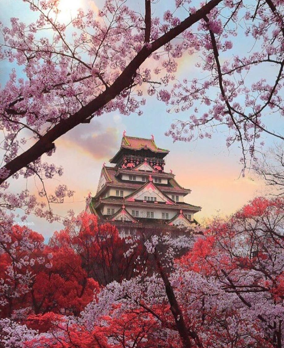 Japan Photo By Dotzsoh Check Her Feed For More Japanische Kirschbluten Kirschbluten Japanisches Schloss