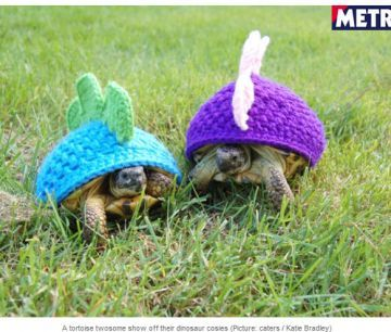 All I want is a pet turtle!