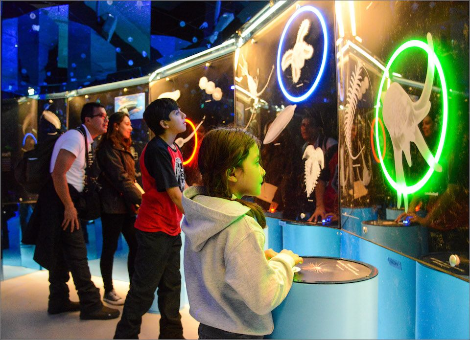 Things To Do New Year's Day 2020 with NYC Kids What's