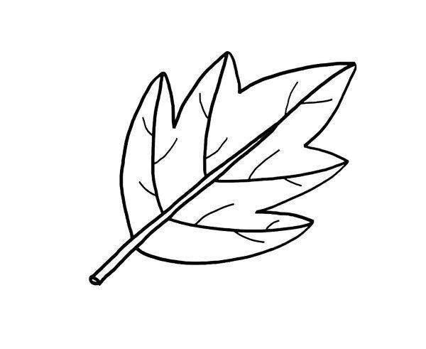 Una hoja de árbol dibujo para colorear e imprimir Our Book of