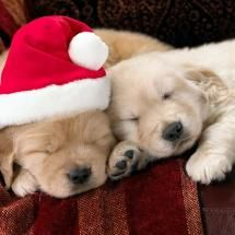 they are on my christmas list:-)