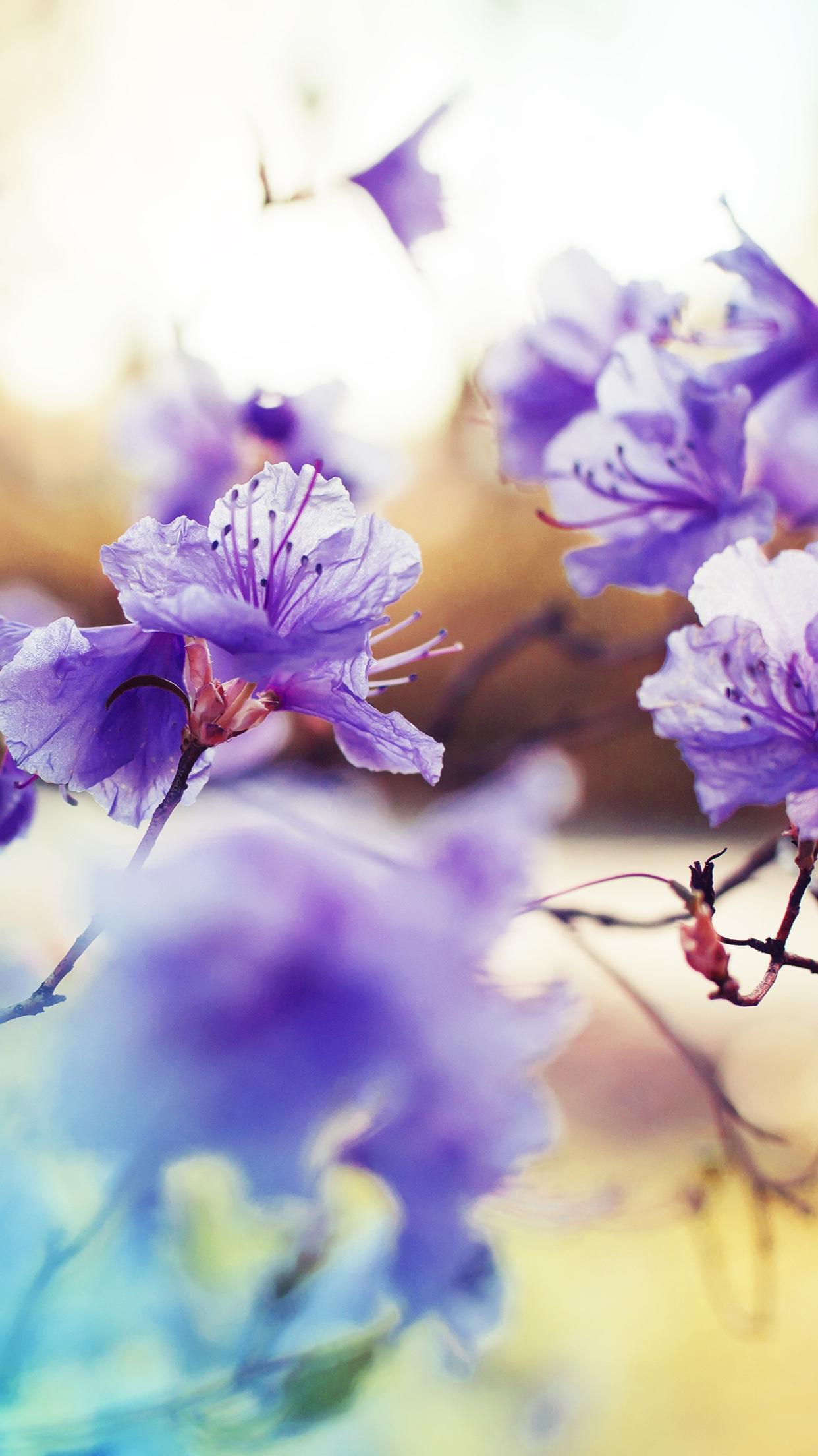 Lilac purple pretty spring blossom flowers Purple