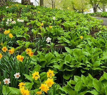 a2be864bd84b6ffb583ae6f311d6f161 - Collin County Master Gardeners Garden Show