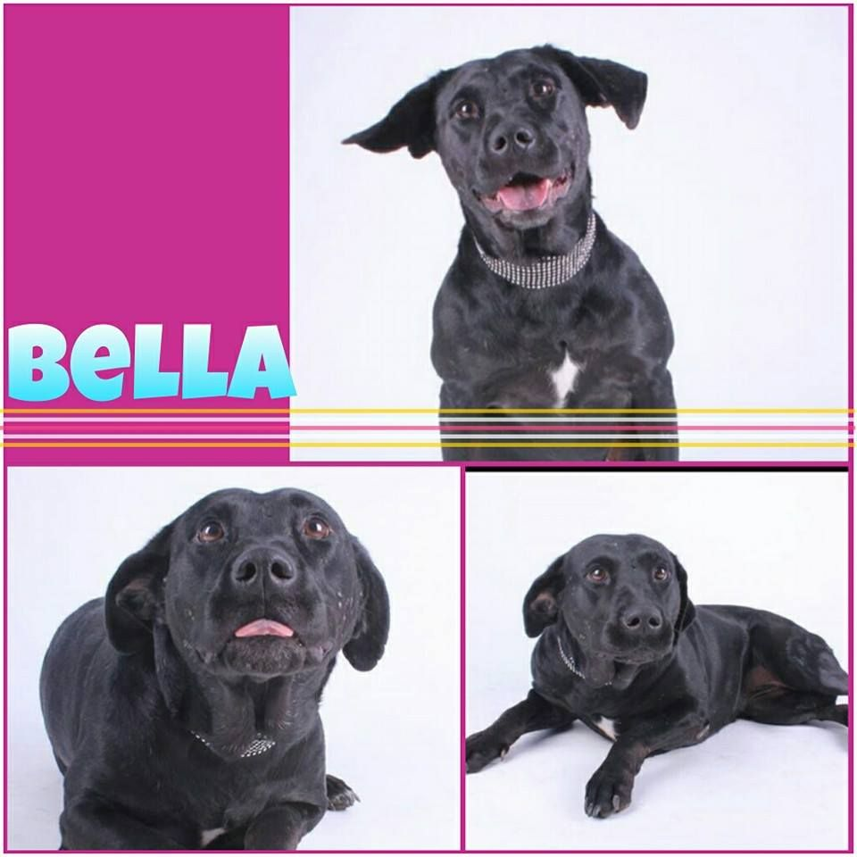 Located near McKinney, Texas BELLA is available for