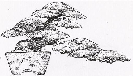 bonsai kengai
