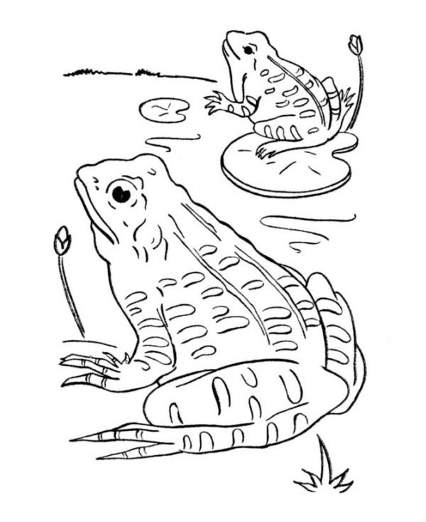 Two Frogs in the Pond Coloring Page - Free & Printable Coloring ...