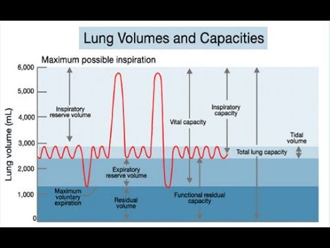 Lung Volumes And Capacities Explained Under  Minutes