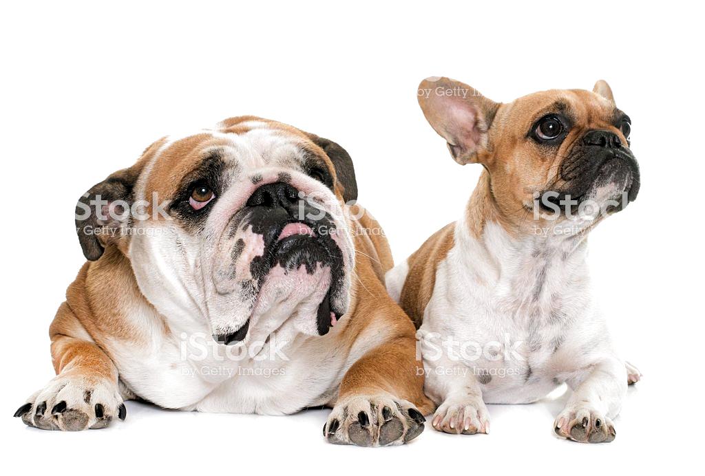 Pin Auf Hunde