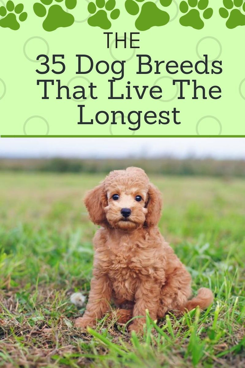 Here Are The 35 Dog Breeds That Will Be Your Best Friend