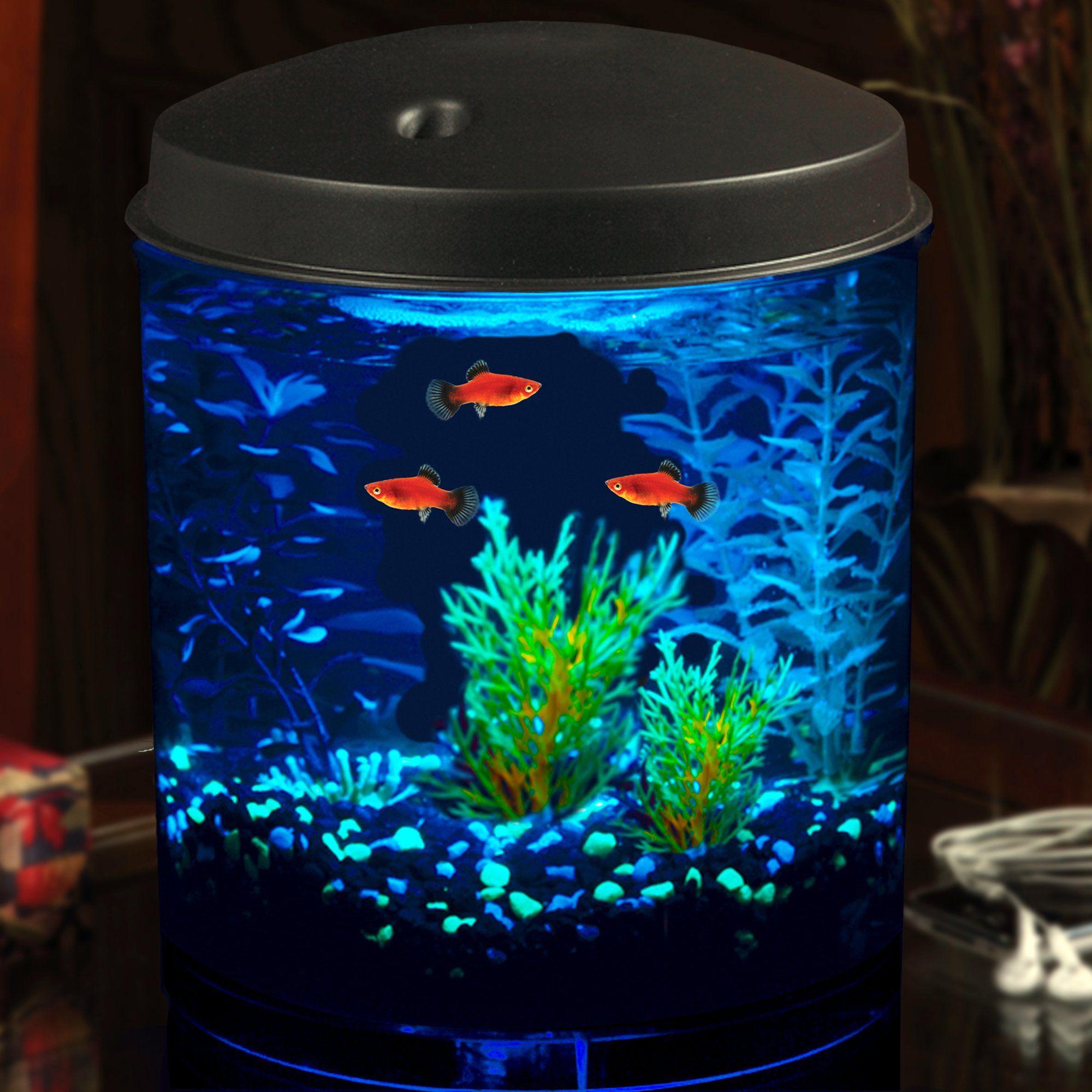 Imagitarium 2 Gallon Cumberland Tank Petco In 2020 Fish Tank Themes Aquarium Fish Led Aquarium Lighting