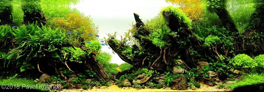 2018 AGA Aquascaping Contest - #284 in 2020 | Aquascape ...