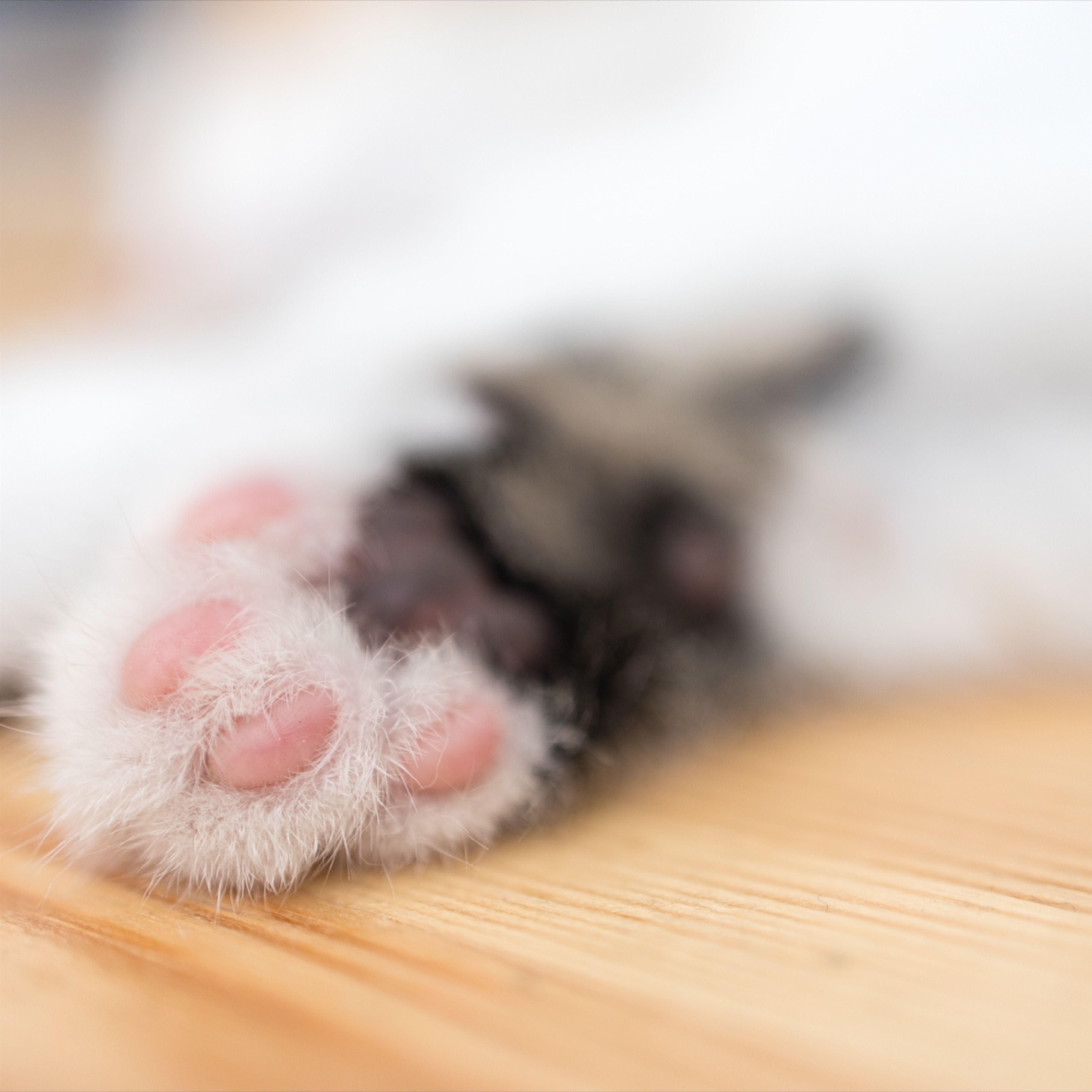 Cat Paw In 2020 Cat Paws Beautiful Cats Cute Cat Wallpaper