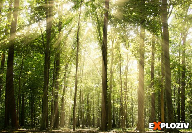 Internet nie je ľudský vynález. Majú ho aj stromy a je tvorený z vlákien húb.        Už dlho je známy fakt, že stromy medzi sebou komunikujú a spolupracujú. Málokto si však uvedomuje, že aj stromy majú svoj internet— drevenú celosvetovú sieť (woo...