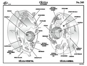 Esquema aparato circulatorio con nombres natural natural urtaz Images