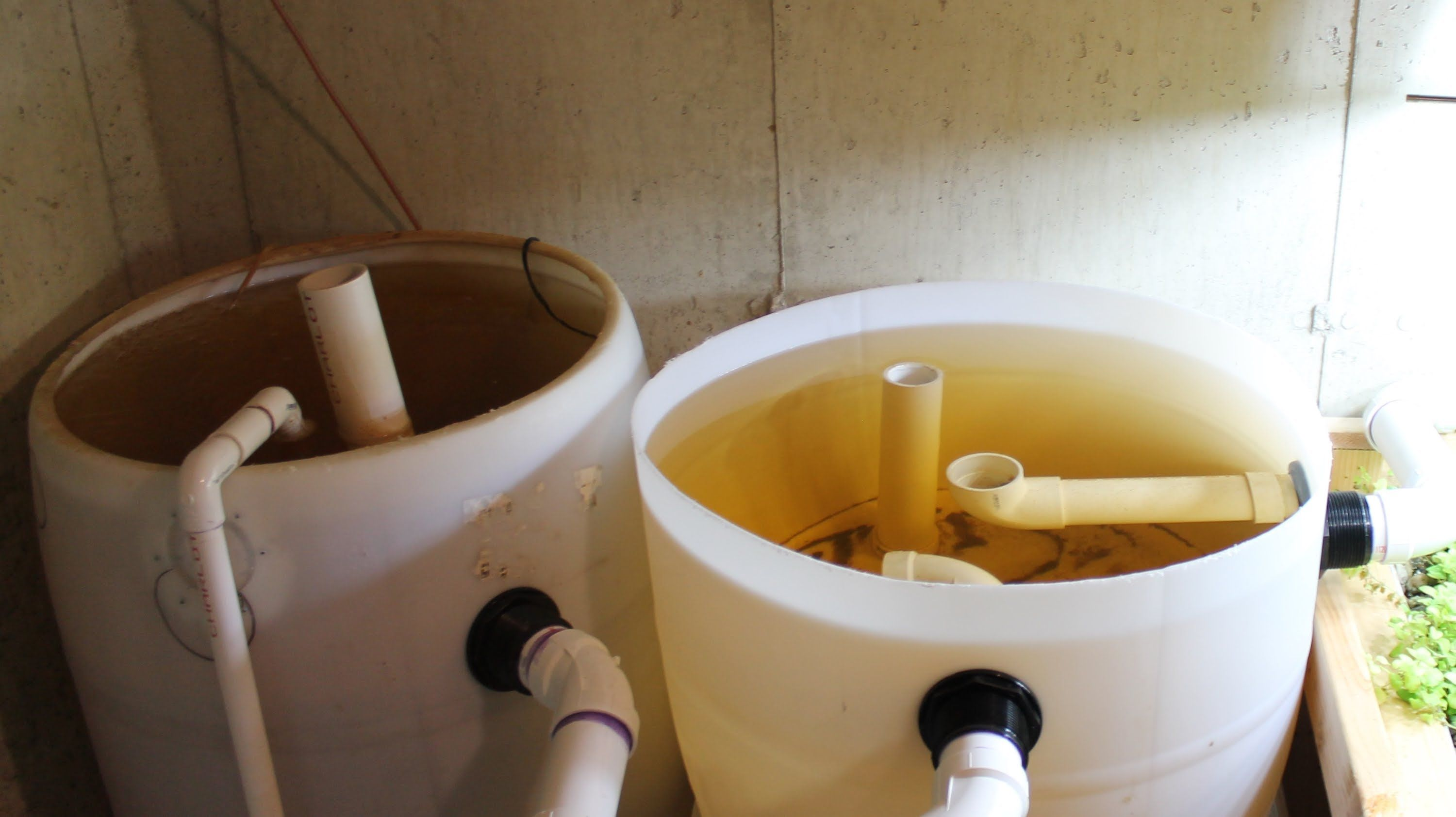 Aquaponics Using A Swirl Filter To Remove Solid Waste