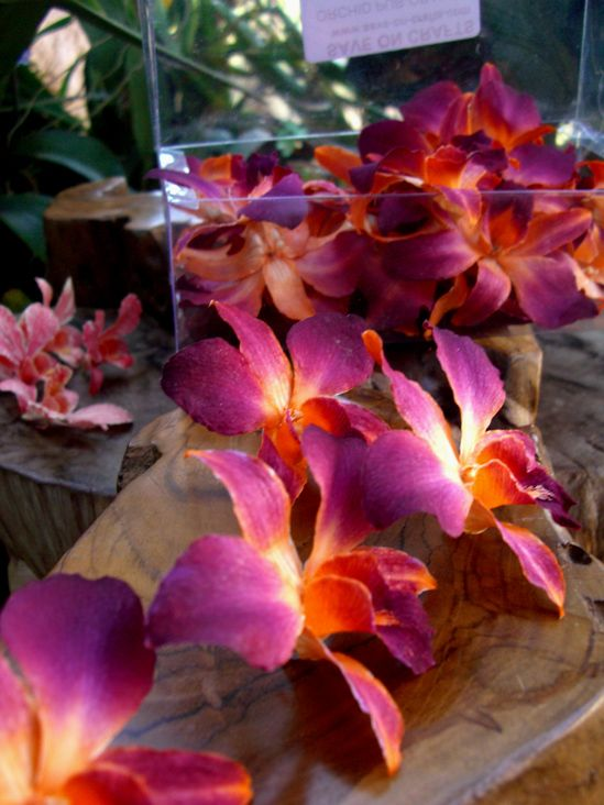 Purple Orange preserved orchids...perfect to spread on the escort card table!