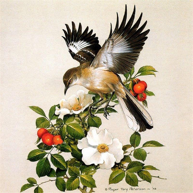 база рисунки красивых птиц на цветах исследователи
