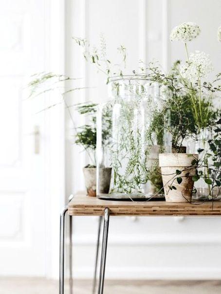 Love indoor plants Green Fingers Pinterest Cosas para hacer