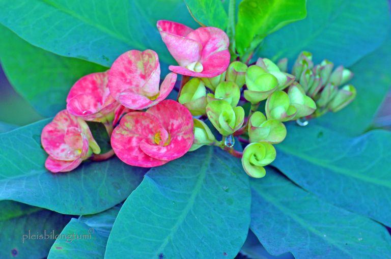Flowers Of The Week Euphorbia In 2020 Euphorbia Flowers Planting Flowers