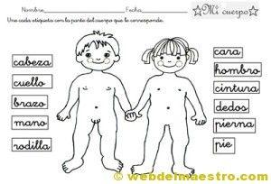 Conceptos Basicos Archives Web Del Maestro Cuerpo Humano Para Ninos Web Del Maestro Anatomia Del Cuerpo