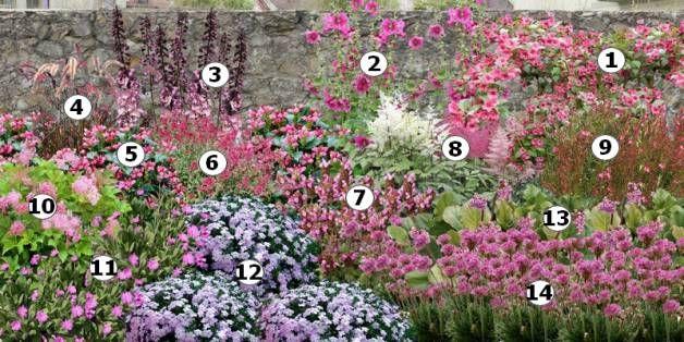 Cr er un massif de fleurs roses jardin pinterest for Massif pierre jardin