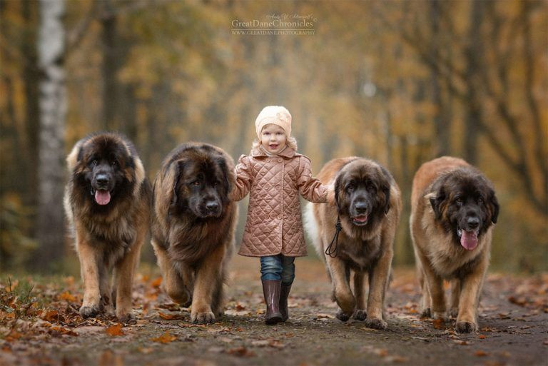 Incredible Photo Series Shows Huge Dogs Playing With Their Tiny - Tiny children and their huge dogs photographed in adorable portraits by andy seliverstoff