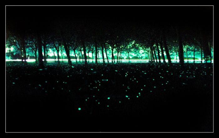 le lucciole