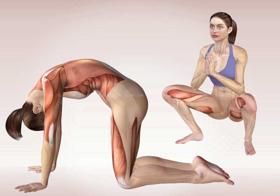 Anatomy of Yoga Poses   Yoga Exercises 3D Illustrations …   Yoga ...
