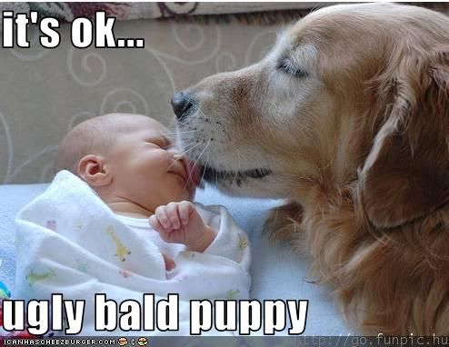 """Not much longer and we will have a new little """"ugly bald puppy""""."""
