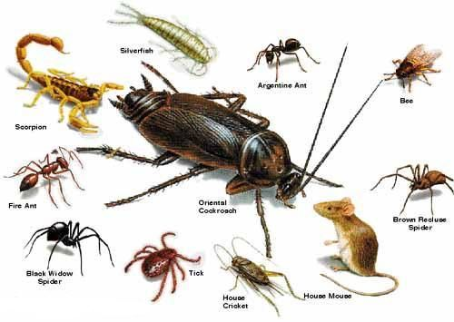 Termite And Pest Control For Residential And Commercial In