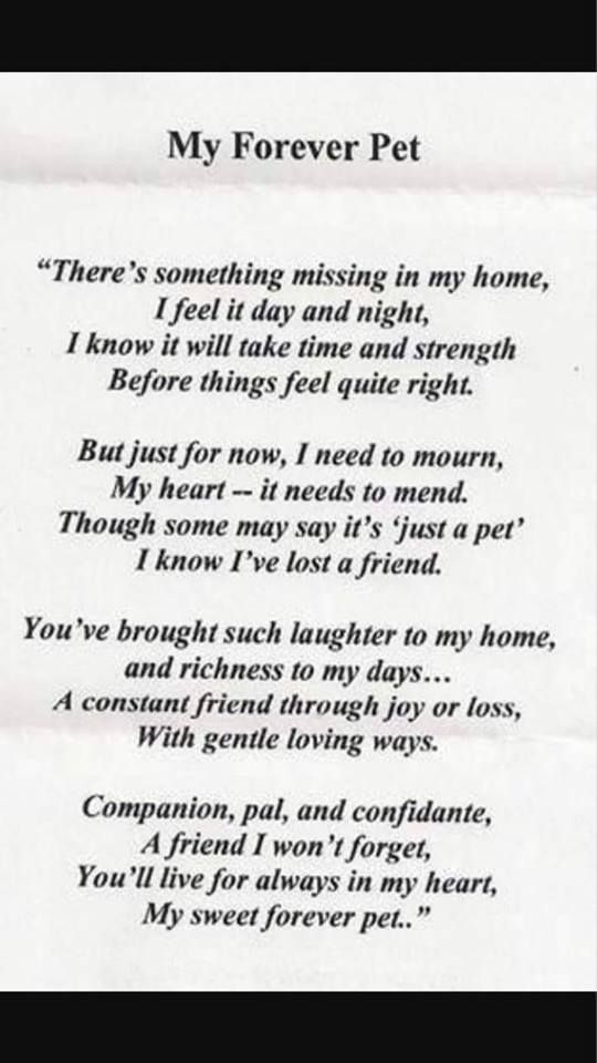 Source Unknown Pet Poems Dog Poems Losing A Pet