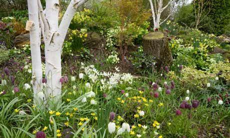Woodland garden GardenYard Ideas Pinterest
