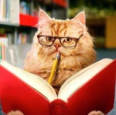 Cat Teacher | teacher cat