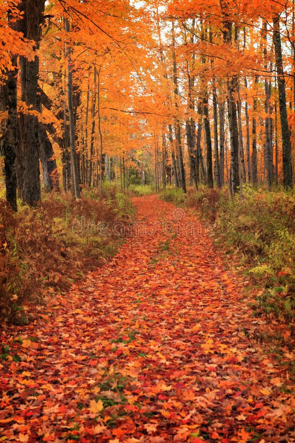 Path In Forest. New England Scene In Vermont , affiliate