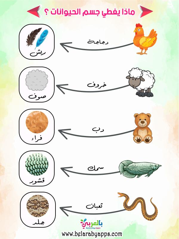 افكار شرح وحدة الحيوانات رياض اطفال حيواناتي المفضلة بالعربي نتعلم In 2021 Islamic Kids Activities Islam For Kids Kids Education