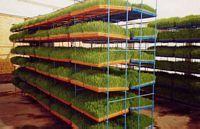 Estructuras para producir forraje hidropónico, Arequipa.