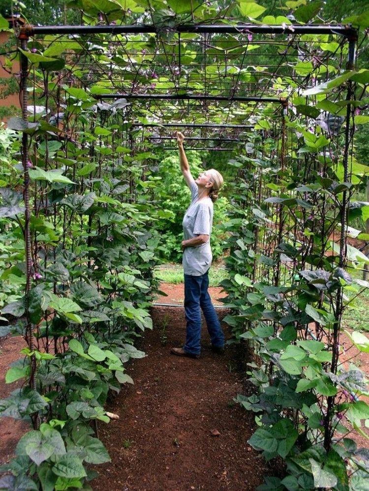 Orchard zu Hause - die notwendigen Schritte, um sie zu schaffen » Wohnideen für Inspiration #ediblegarden