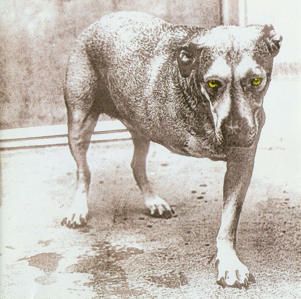 """Jerry Cantrell's Dog """"Sunshine"""" Was The 3 Legged Dog On Alice in ..."""