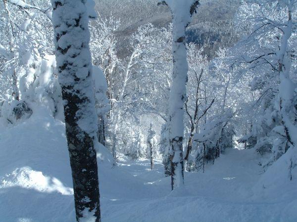 Les sous-bois légendaires du Mont SUTTON