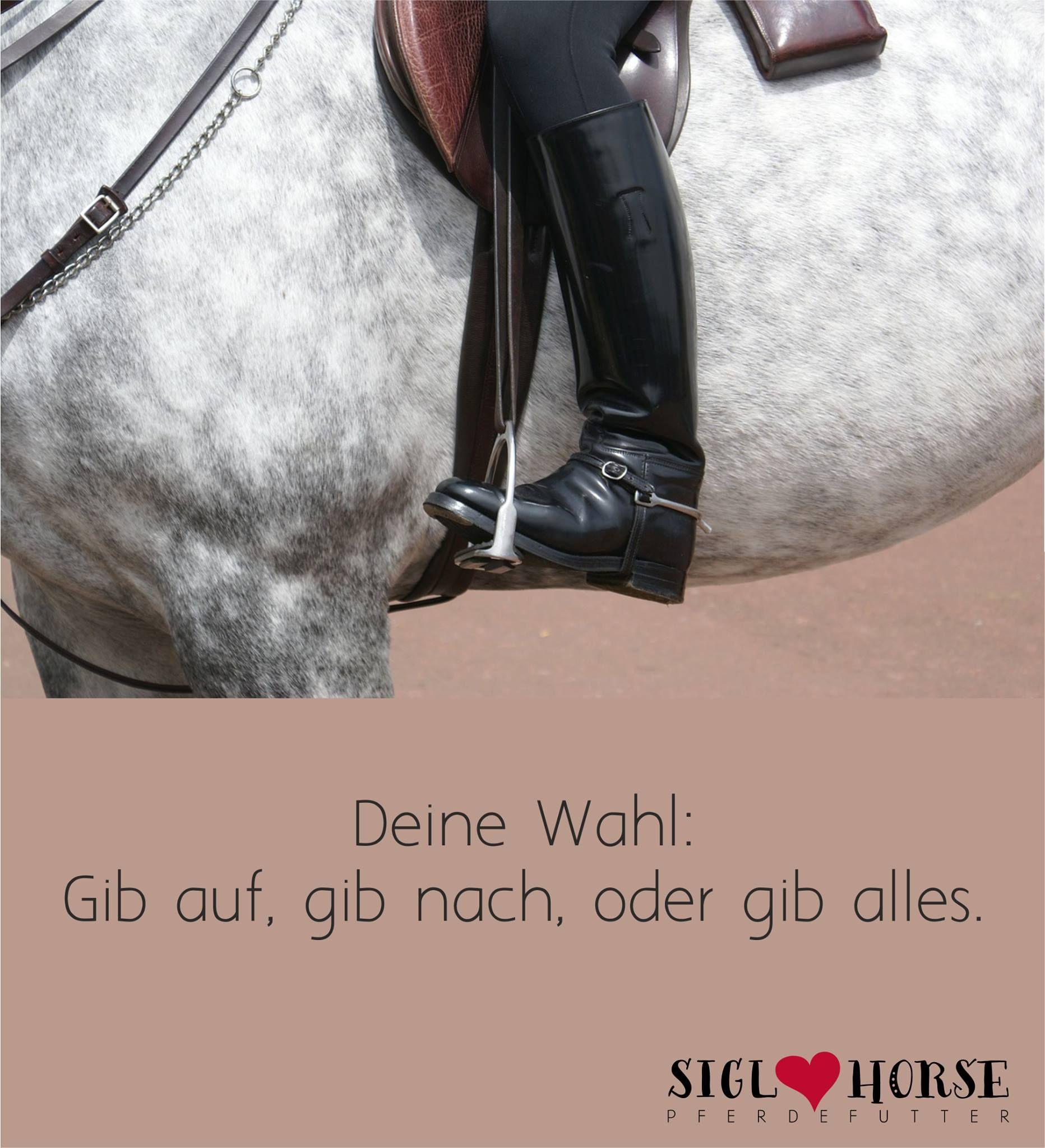 Deine Wahl: Gib Auf, Gib Nach, Oder Gib Alles. #pferd #