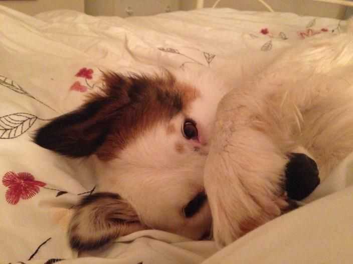 Goodnight everyone  hope lots of dogs like me were adopted this weekend  @pupaid @rickygervais