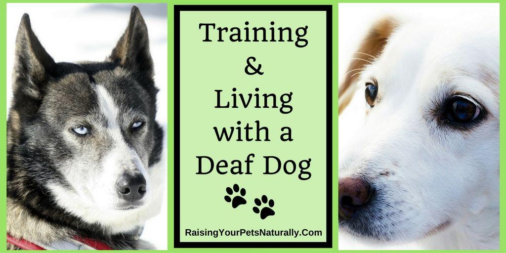 Deaf Dogs And How To Train A Deaf Dog Deaf Dog Dog Sign