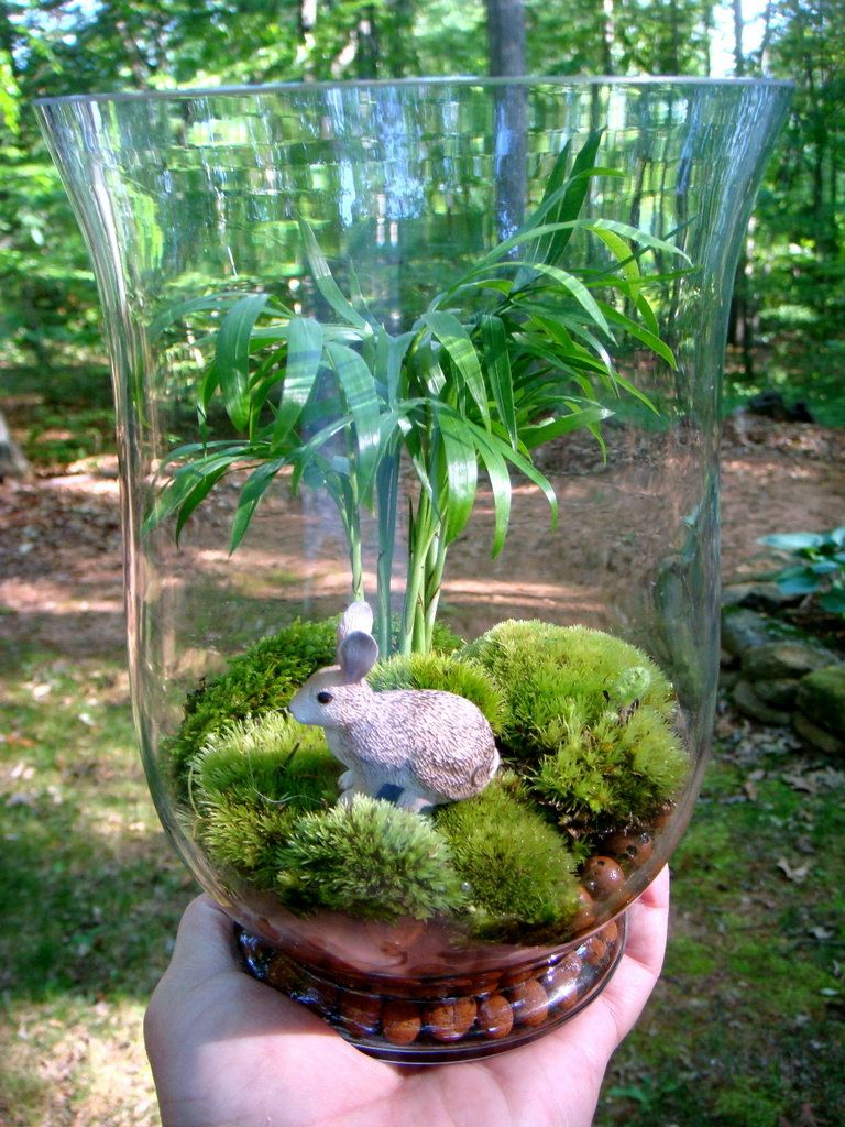 Terrarium in a Hurricane Vase... Could be done with