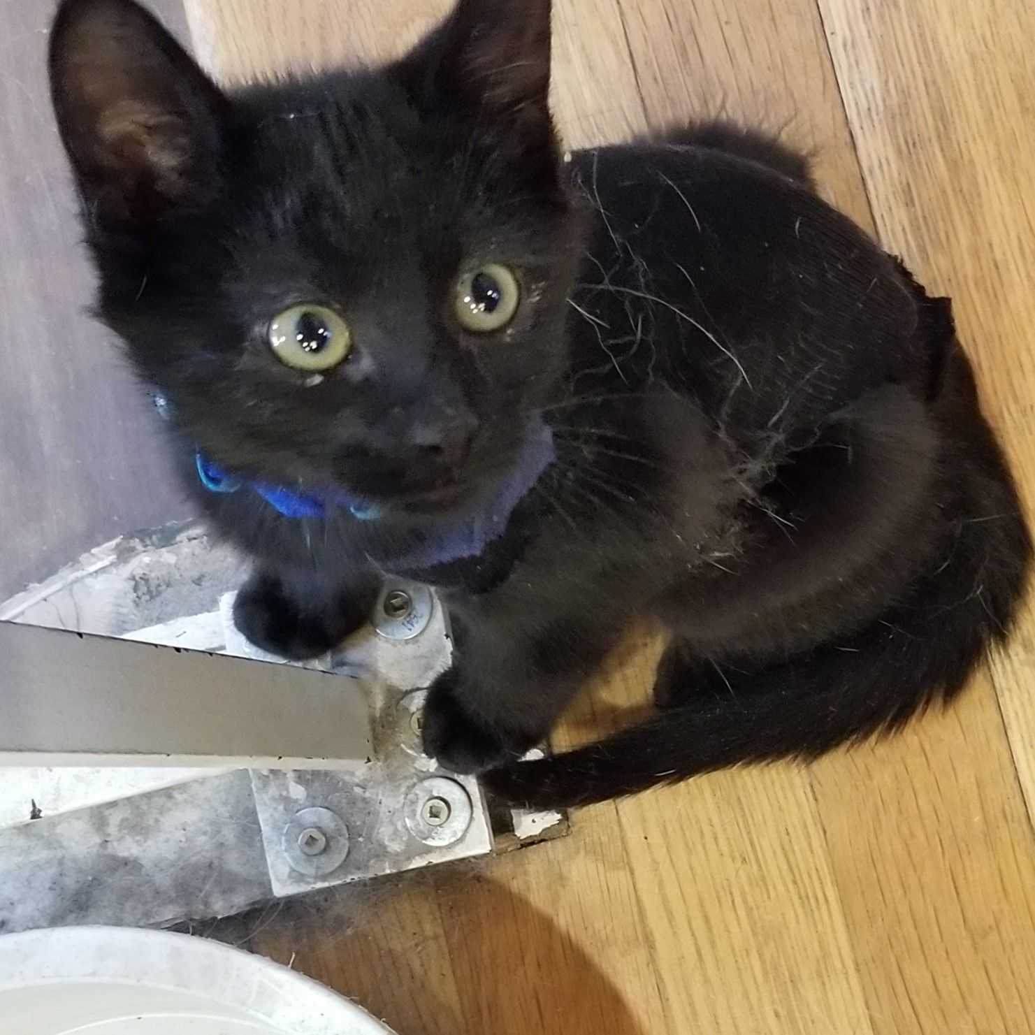 Say hi to Bear, a male kitten who is new for adoption